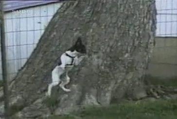 Ce chien a très envie de passer chez le voisin