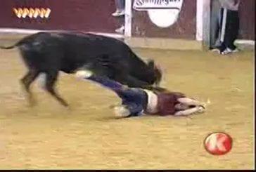 Se faire déculotter par un taureau