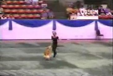 Danse avec ton chien