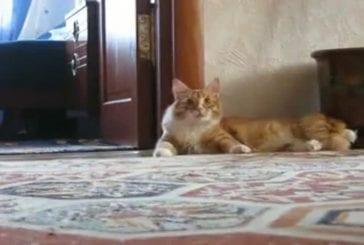 Un chat part en weeling