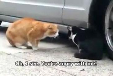 Conversation d'un chat drogué
