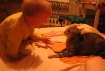 Un chat et un bébé jouent mais ce dernier donne un fameux coup à l'animal !