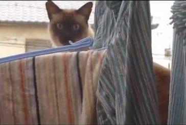 Un chat suicidaire !