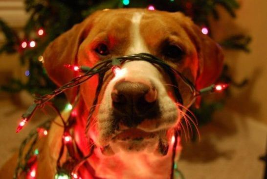 Joyeux Noel 45