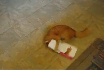 Un chat attaque une carte musicale !