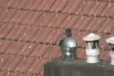 Un pigeon s'en donne à coeur joie !