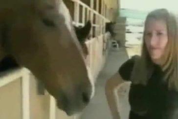 Le cheval qui hurlait à l'oreille des hommes