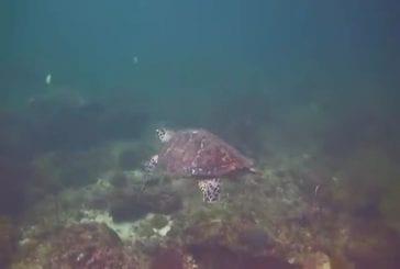 Deux tortues se font un high-five !