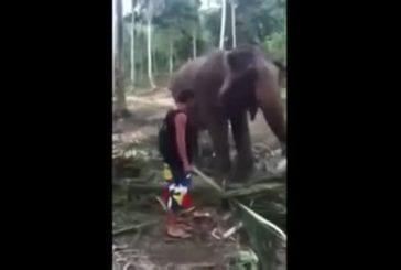 Un coup de trompe d'éléphant dans la tête