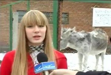 Un âne lache un gros pet