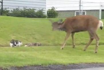 Bambi pas contente !
