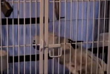 Evasion du perroquet Clyde