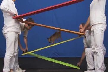 OK Go - White Knuckles - Animaux