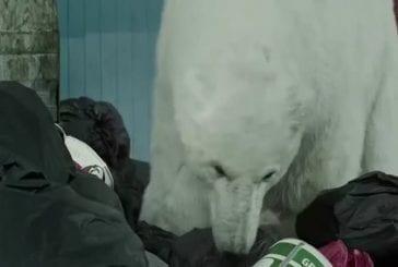 Un ours polaire se promenant dans les rues de Londres