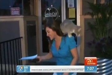 Un chat stoppe une émission de télévision