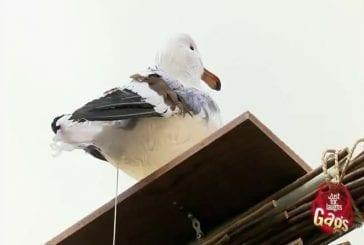 Soupe au caca de pigeon