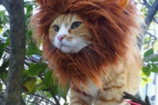 Un chat prêt pour la carnaval
