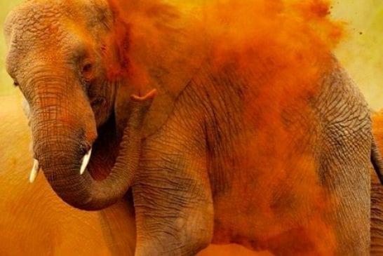 Un éléphant artiste
