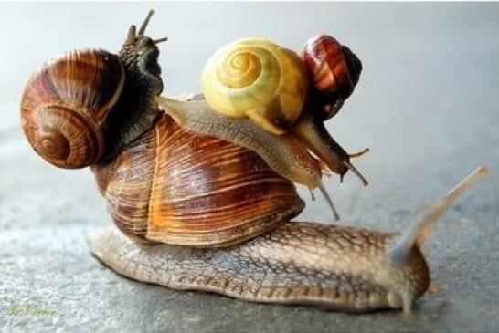 Un transport d'escargot