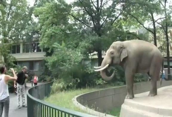 elephant jette sa merde
