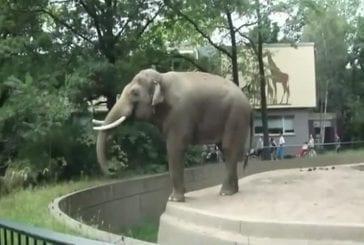 Eléphant jette sa merde sur les visiteurs