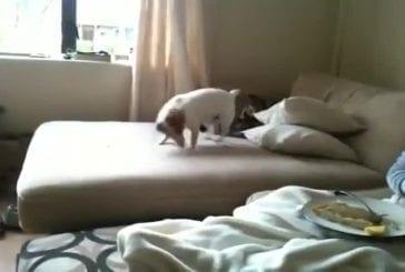 Ce chien déteste les citrons