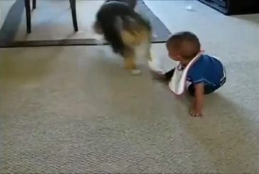 Des bébés mort de rire avec des chiens