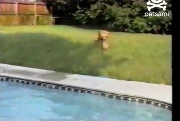 Ce chien est un héro