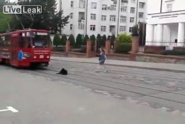 Chien refuse de laisser passer le tram