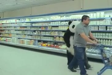 Ne jamais dire non à un panda