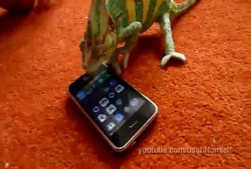 Chameleon was frightened by iphone (what he saw )