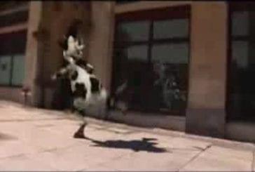 Drôle de vache funny cow