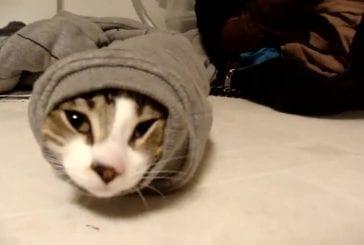 Chat bloqué dans la manche d'un pull