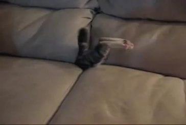 Chat qui se cache à l'intérieur du fauteuil