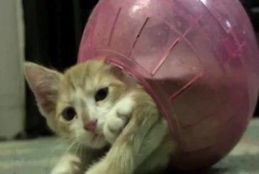 Chaton dans une boule pour hamster
