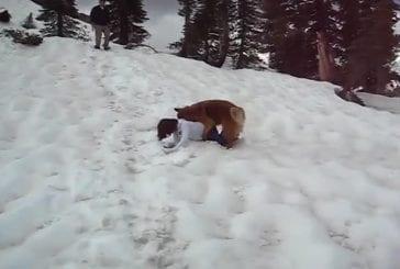 Sledding with the dog
