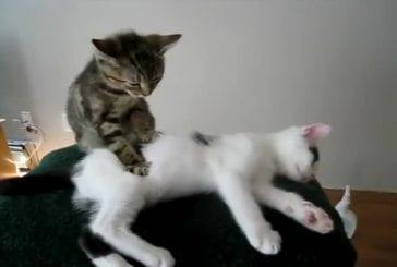 Massothérapie chaton