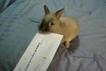 Comment ouvrir le courrier