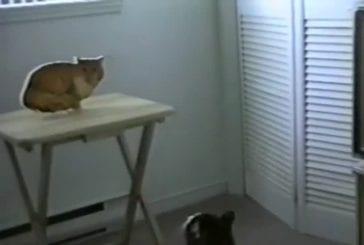 Combat de chat avec un chat photo