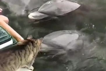 Chat et dauphins qui jouent ensemble!