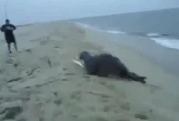 Une otarie vole le poisson du pêcheur