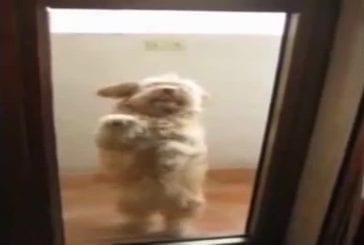 Danse merengue chien!