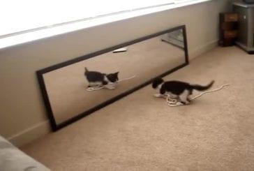 Le chaton et le miroir