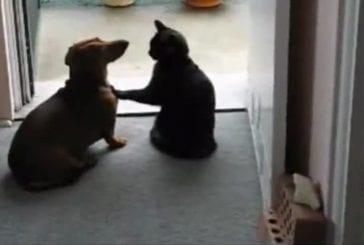 Un chat calme un chien qui demande des calins