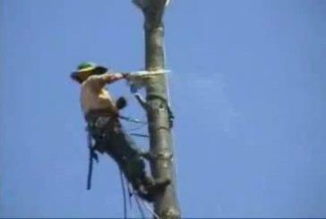 Accident drôle d'un arboriste grimpeur
