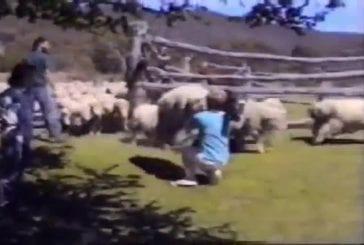 Saut de mouton