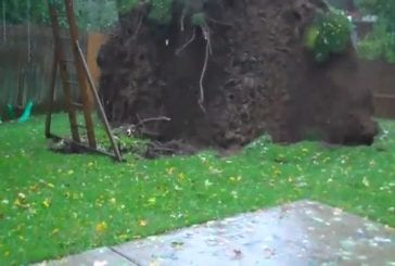 Arbre durant la tempête Sandy