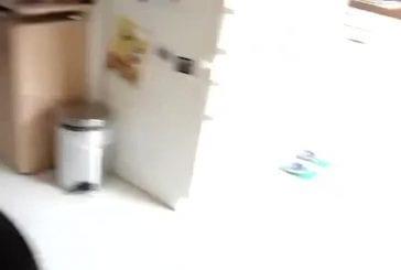 Chat se cache dans un sac en plastique