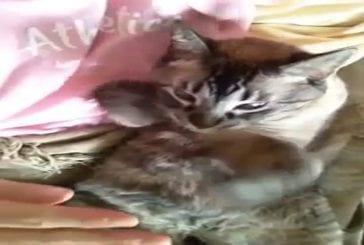 Chat veut des caresses