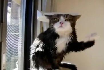 Chat après le bain en slowmotion